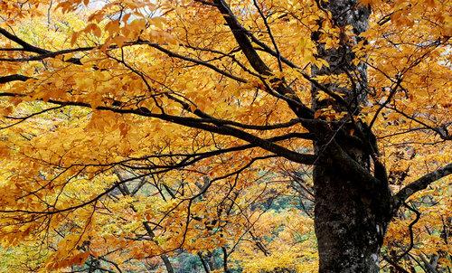 夜晚森林仰望摄影照片
